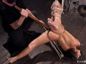 Shaved pussy babe in hogtie whipped